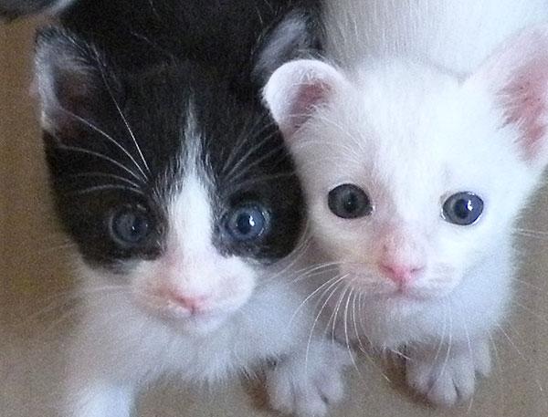 猫 掲示板 無償 譲ります