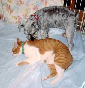 犬のラムとトロ
