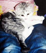 子猫時代のレオ