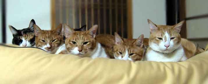 ずらり並ぶ猫達