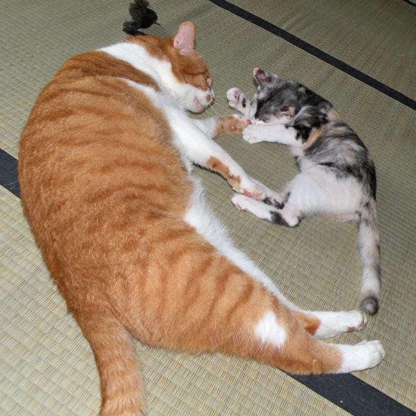 デブなトロと子猫時代の栄ちっち
