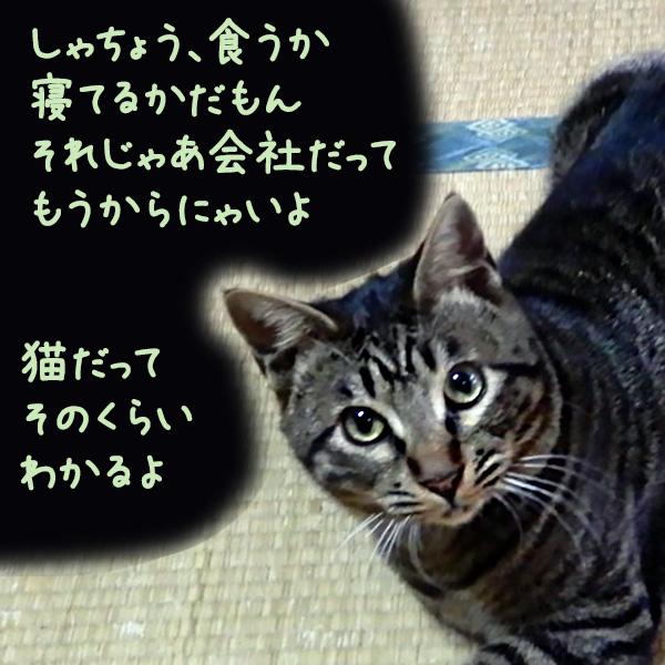 コタ「しゃちょう、食うかねてるかだもん それじゃあ会社だってもうからにゃいよ 猫だってそのくらいわかるよ」