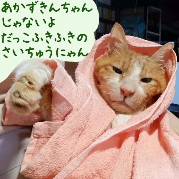 トロタオルをかぶってまるで赤ずきんちゃん