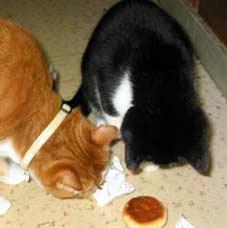 マンジュウを盗医食いする猫達