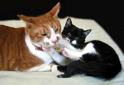 昔のトロと子猫時代のハナ