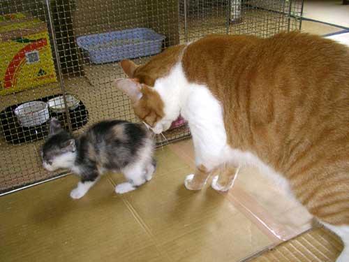子猫時代の栄ちっちとトロ