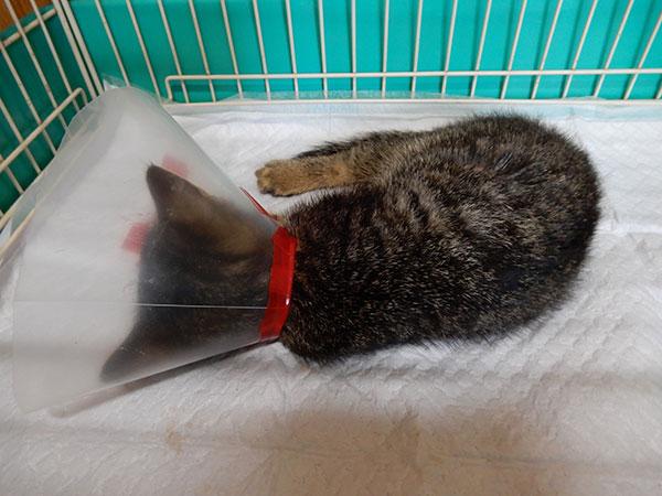 3本足の子猫を保護