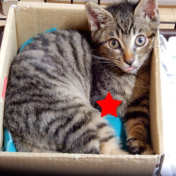 箱に入る虎太郎