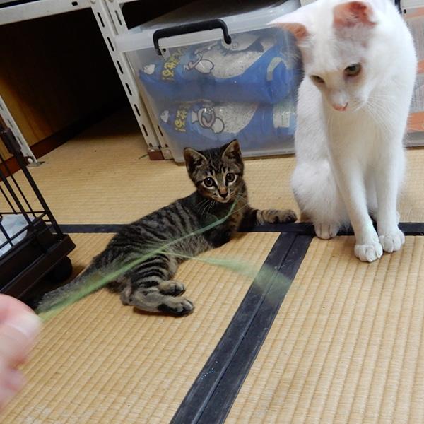 シロロと虎太郎
