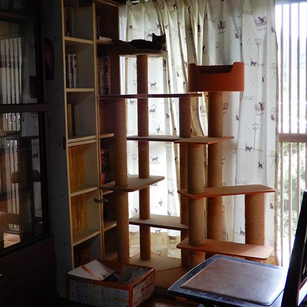キャットタワーの上の虎太郎