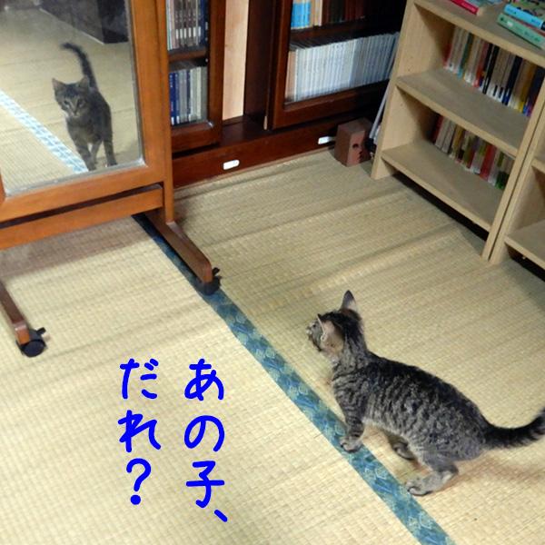 虎太郎と鏡