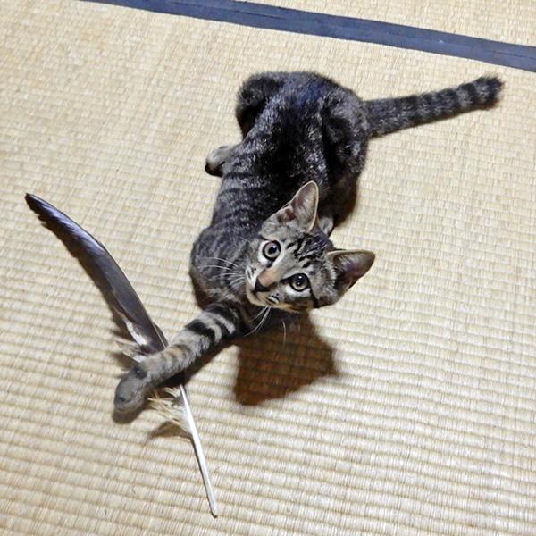 虎太郎とトンビの尾羽