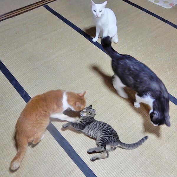 トロ、くるるん、シロロと虎太郎