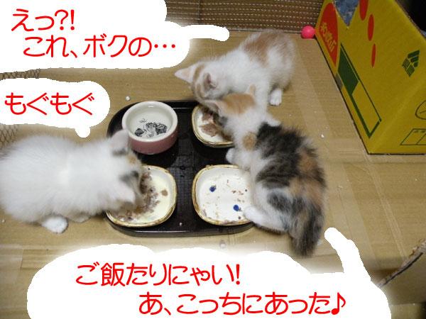 子猫たち 「ご飯たりにゃい!あ、こっちにあった♪」 「えっ?!これ、ボクの・・・」 「もぐもぐ」