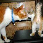 トロと子猫
