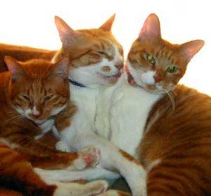 茶トラ猫たち