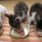 赤ちゃん猫達