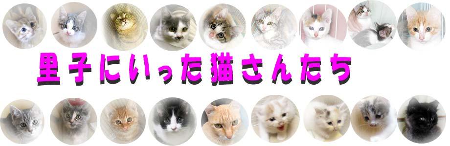 里子に行った猫さんたち