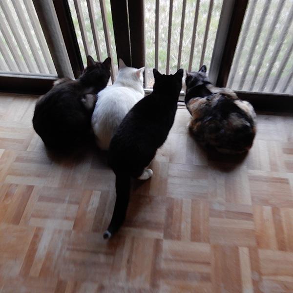 窓辺に集まる猫たち