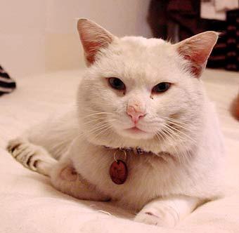 猫ビフォー