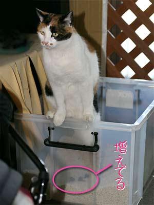 猫トイレ写真