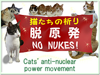 猫達の脱原発バナー