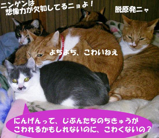 猫達の脱原発