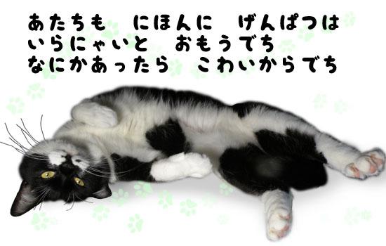 脱原発猫 no nukes cat