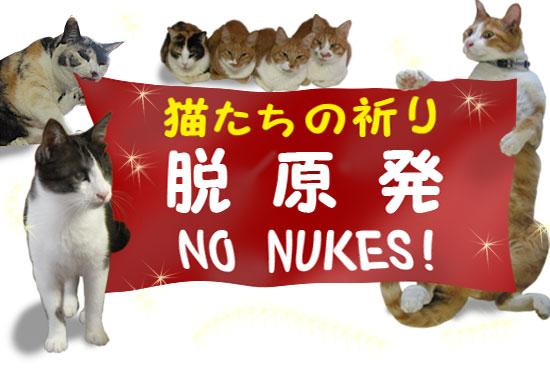 脱原発猫 no nukes cats