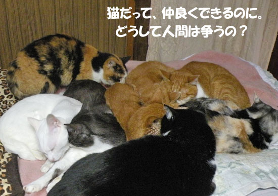 戦争反対猫 no war cats