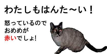 反戦猫 no war cat