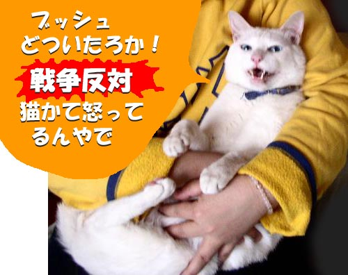 反戦猫 no war cat