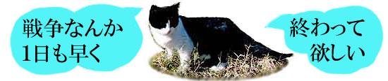 反戦猫 nowar cat