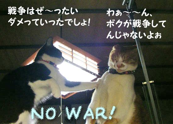 反戦猫 no war cats