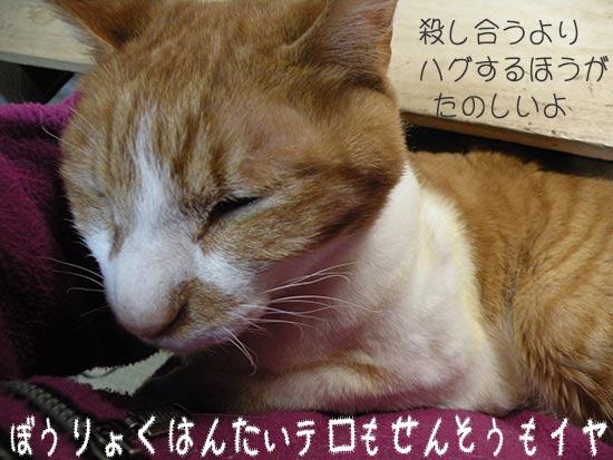 戦争反対・テロ反対な猫