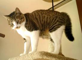 猫 ビフォーアフター