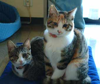 猫風邪がひどかった保護子猫たちがきれいに
