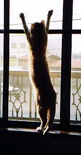 背伸びしている猫