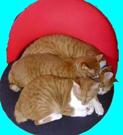 猫3ニャン