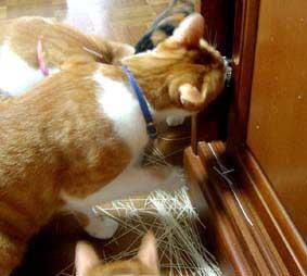 戸棚を悪戯する猫たち