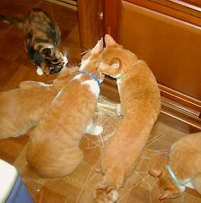 いたずら猫たち