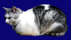 箱座りする猫、レオ