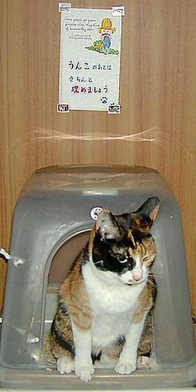 猫トイレの上に張り紙