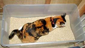 大型収納ケースを猫トイレに