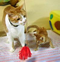 雄猫と子猫