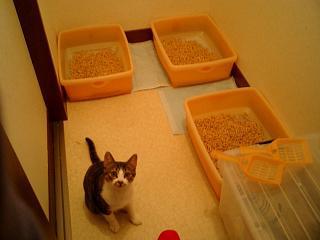 猫専用トイレルーム