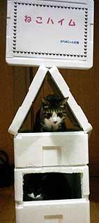 発泡スチロール猫ハウス