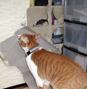 猫とふすま
