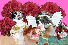 猫写真加工
