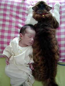 猫と赤ちゃんが添い寝
